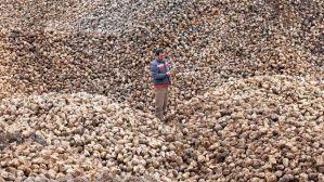 konya-zuckerrueben-zuckerproduktion-zucker